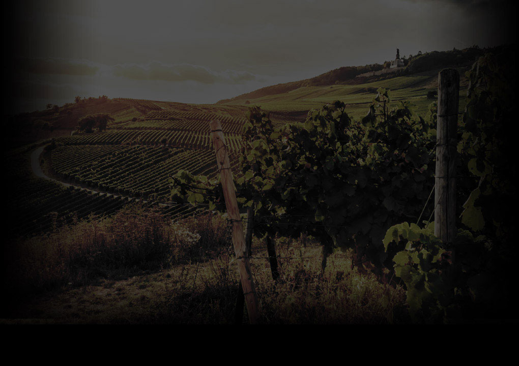 Eyrie Vineyard pinot vine